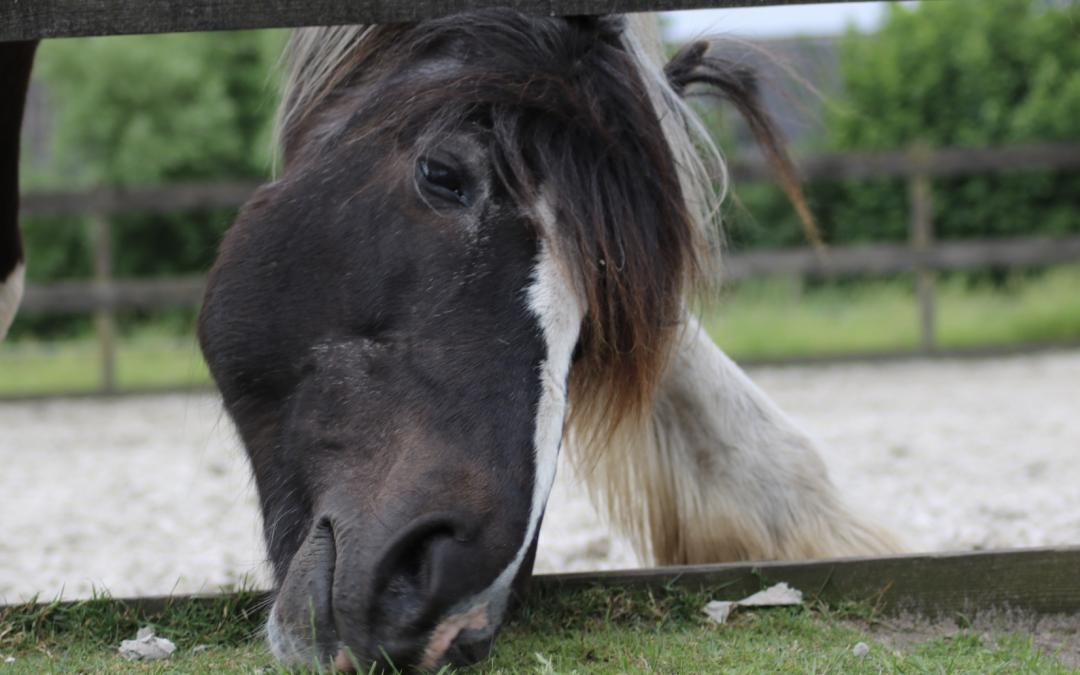Dagboek van een paardencoach – september