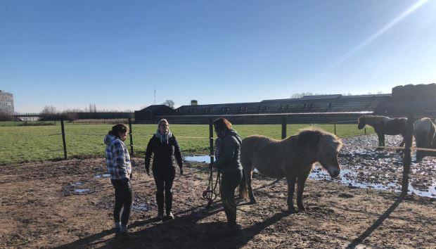 Opleiding Psychosociale Paardentherapie