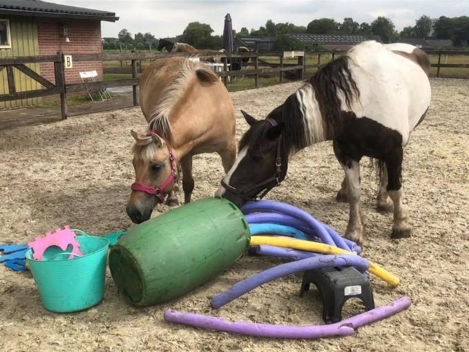 Paarden op onderzoek uit | Burn out therapie