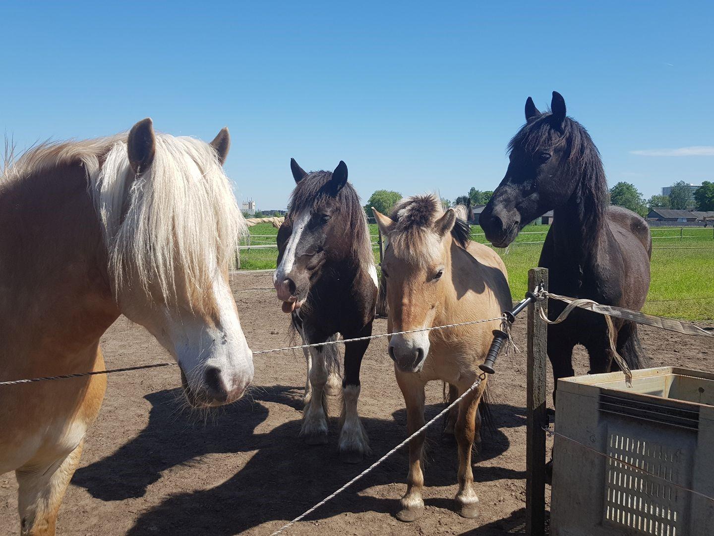 Burn out ervaringen 2Tango Therapie met paarden