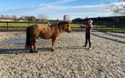 Hoe paarden je kunnen helpen om van een burn out af te komen